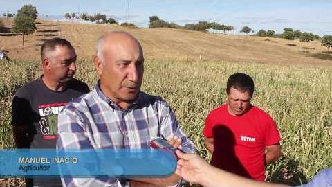 Agricultores desesperados com prejuízos causados por veados MDB